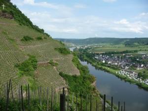 German Vines